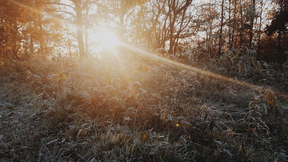 Gartenbau Friedrich Murten Schweiz im Winter